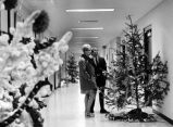 Christmas Tree Lane in the Manwaring Center