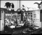 [Specimens brought back by Chester G. Van Buren, ca. 1903]