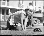 [A female groundworker lays sod, 1973]