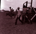 Kids steer riding