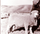 Doc Hohman with prize ram