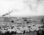 [McFarland Sheep Camp in Mapleton]