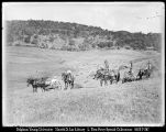 [Haying Time Near Mokelumne Hill]