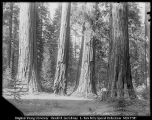 [Calaveras Big Trees]