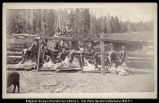 Sheep Shearing, Manti, Utah