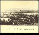[Yoking up- Ox Train 1866]