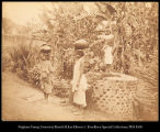Ceylon.  Tamil Women at the Well.  The Mariawatta Tea Estate.  #245