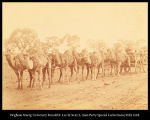 Camel Wagon as used in the interior of South Australia. Wheels all iron