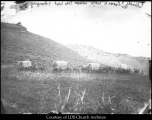 066b Wagon Train between Echo Head & Hanging Rock - 1867