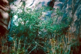 A Bush on Mount Sinai