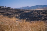 Burnt Fields in the Sorek Valley