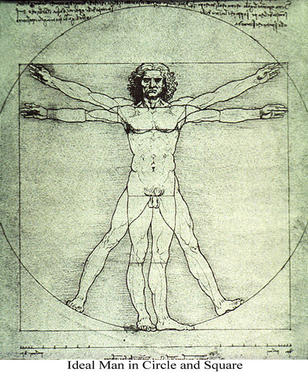 The Proportions Of The Human Body According To Vitruvius